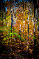 ROCK CREEK PARK: AUTUMN SPLENDOR collection